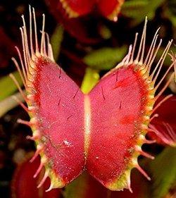 fleur épineuse