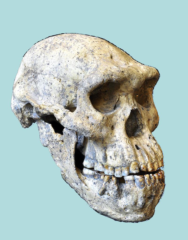 quelle supposition est faite pendant la datation relative des fossiles