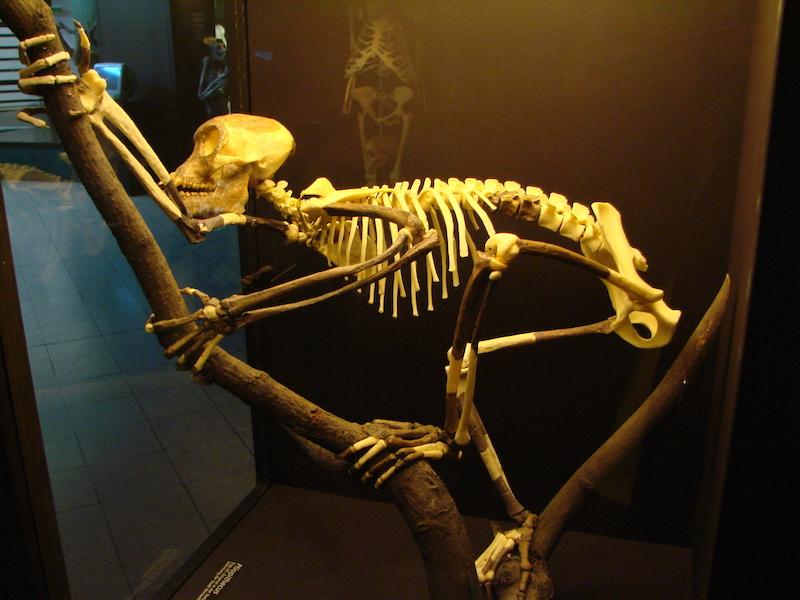 fossiles datant de potassiumcréer un titre de profil de datation